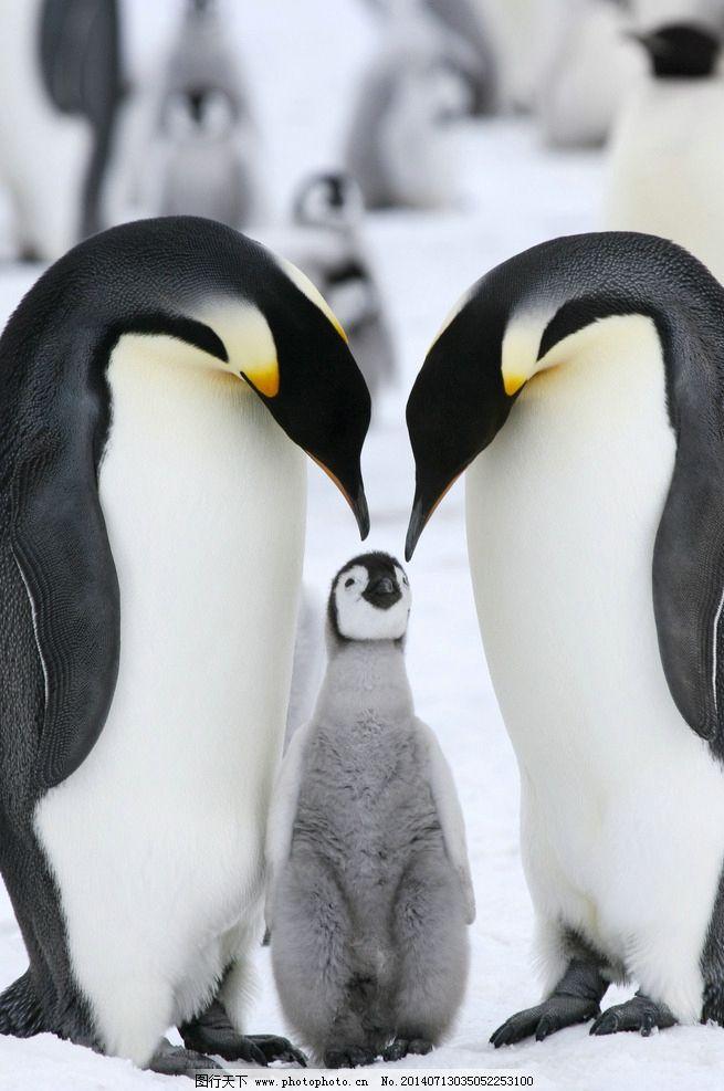 四折企鹅剪纸步骤