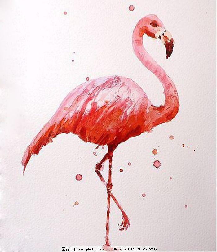 位图 动物 火烈鸟 水彩 色彩 免费素材