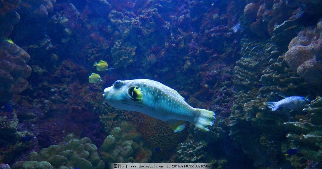 青岛极地海底世界图片