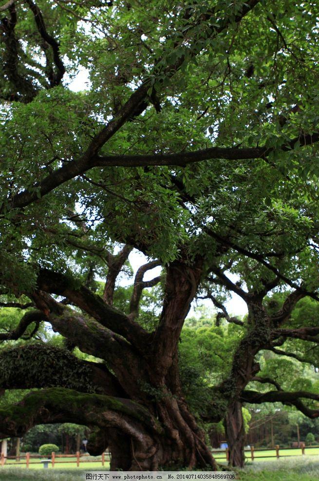 福州森林公园图片