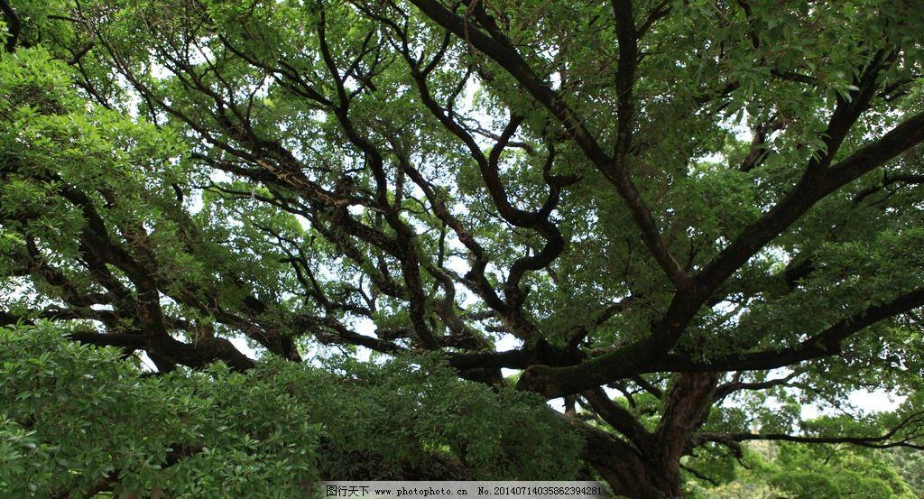 福州森林公园 山 花草树木 亭子 林中漫步 旅游 摄影 山道