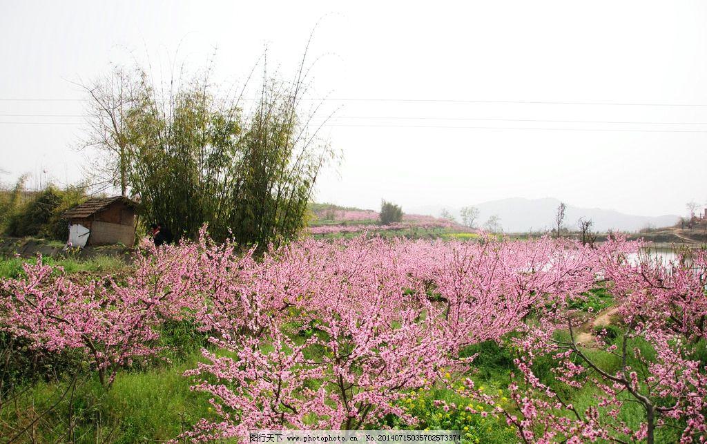 桃花 花 自然 风光 风景 花草 生物世界 摄影 300dpi jpg