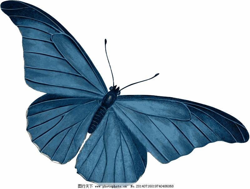 动物 飞行 蝴蝶 昆虫 蓝色的