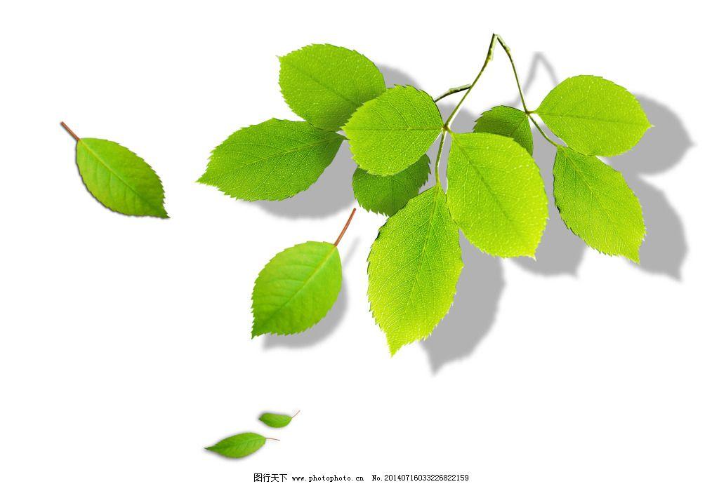 绿色叶子免费下载 春天 绿叶子 夏天 绿叶子 春天 夏天 psd源文件