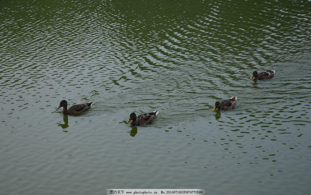 清澈得水湖面动物摄影