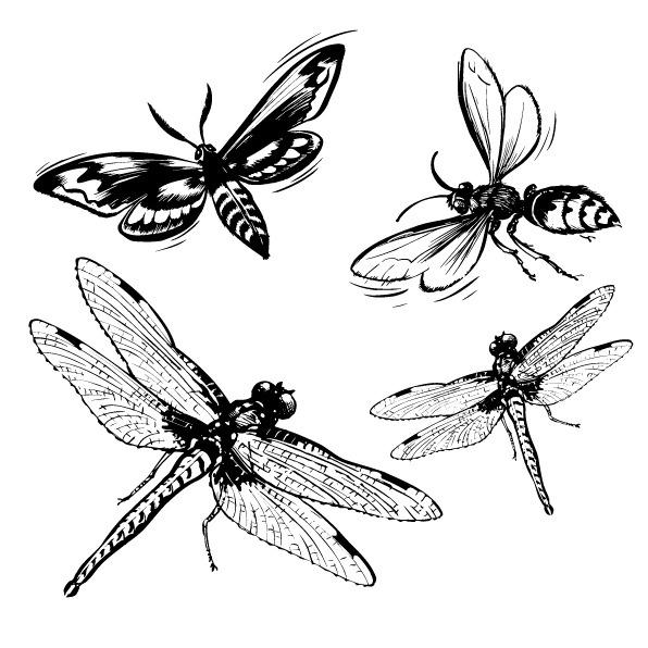 印花矢量图 动物 昆虫 蜻蜓 蜜蜂 免费素材