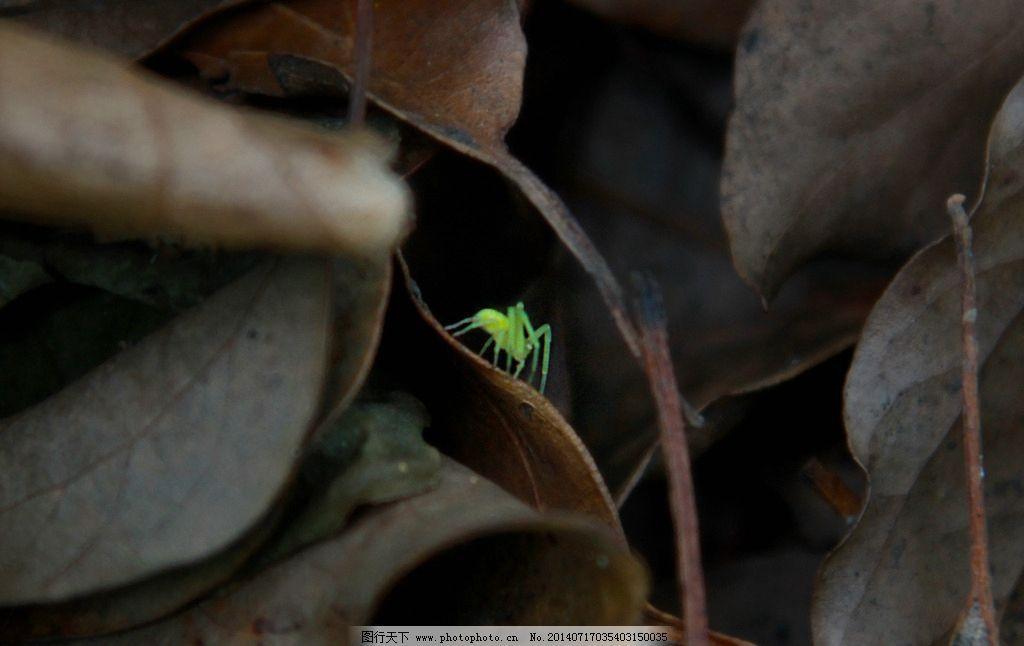 绿蜘蛛 昆虫 特写 树叶 抓拍 生物世界 摄影 72dpi jpg