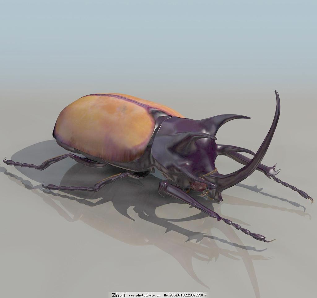 甲壳虫 昆虫 beatle 甲壳虫 动物模型 昆虫 3d模型素材 动植物模型
