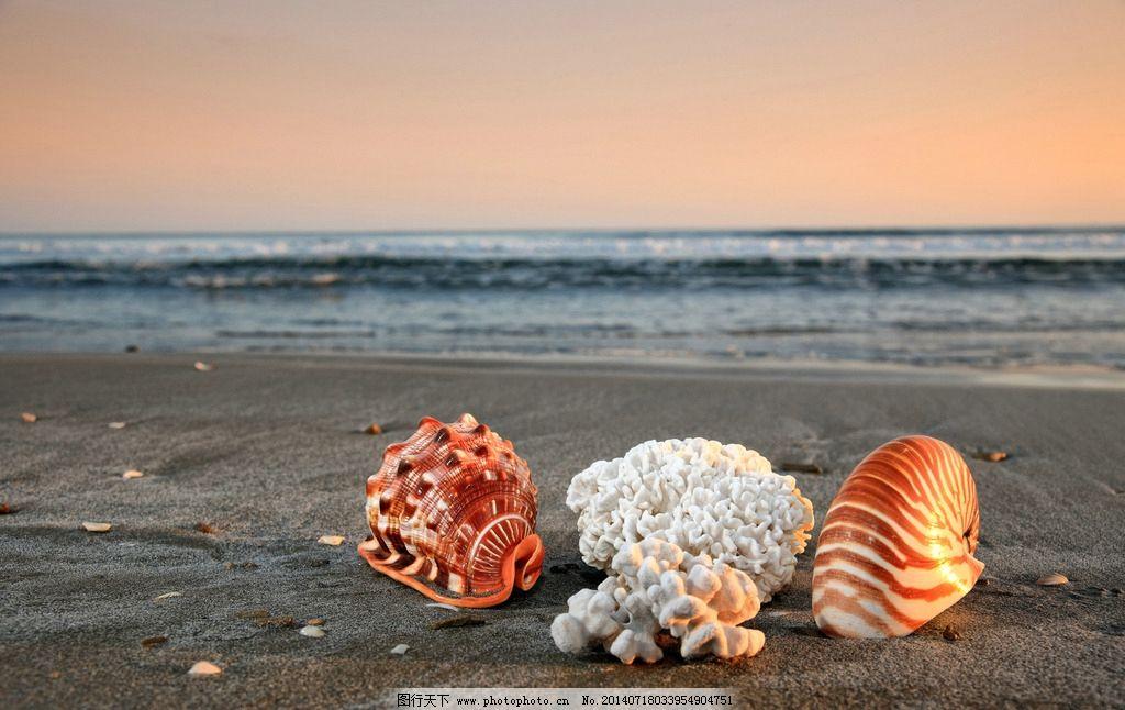 海边海螺 秦皇岛 北戴河 自然 风景 风光 旅游 沙滩 海边 海螺 日落