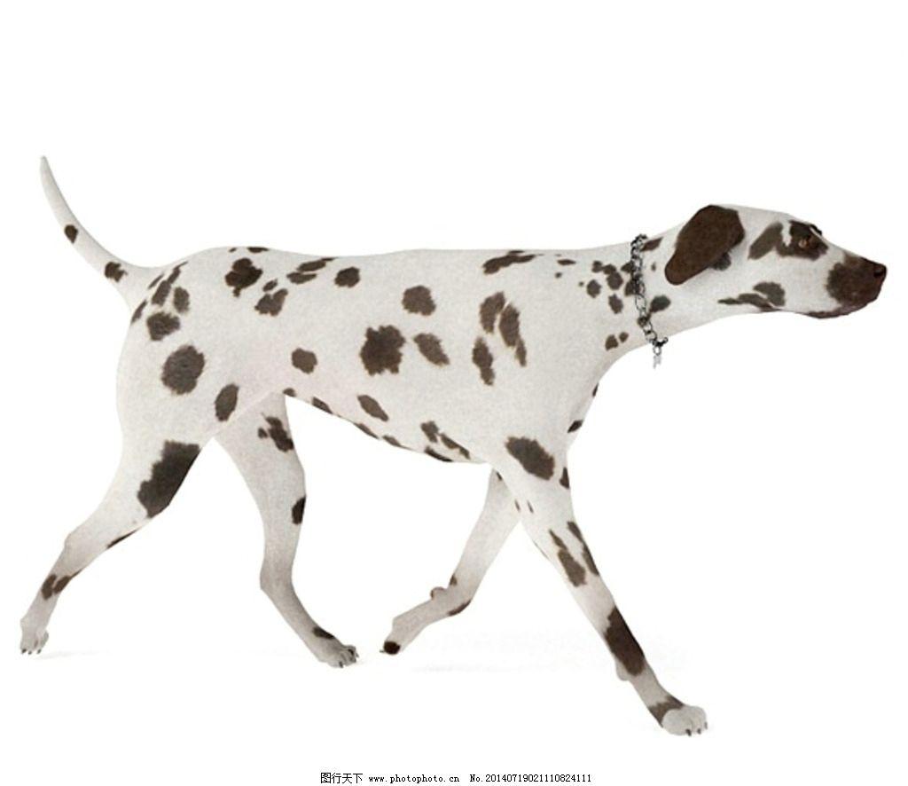动物 狗 vray模型 动物模型 高品质模型 室内模型 3d设计 设计 72dpi