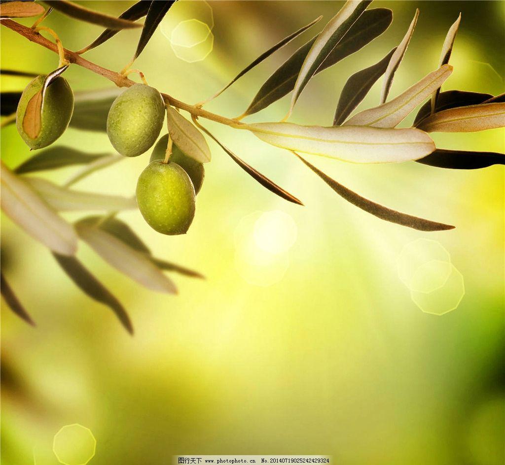 橄榄 橄榄叶 橄榄树 食物图片