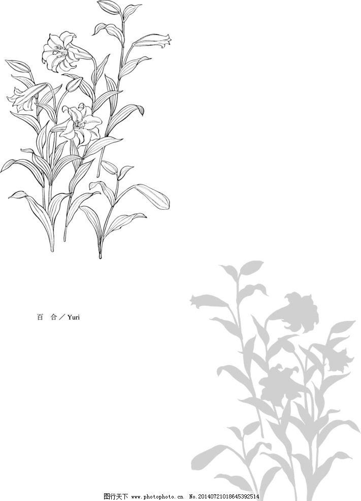 植物线稿 手绘 练习 工笔 动漫动画