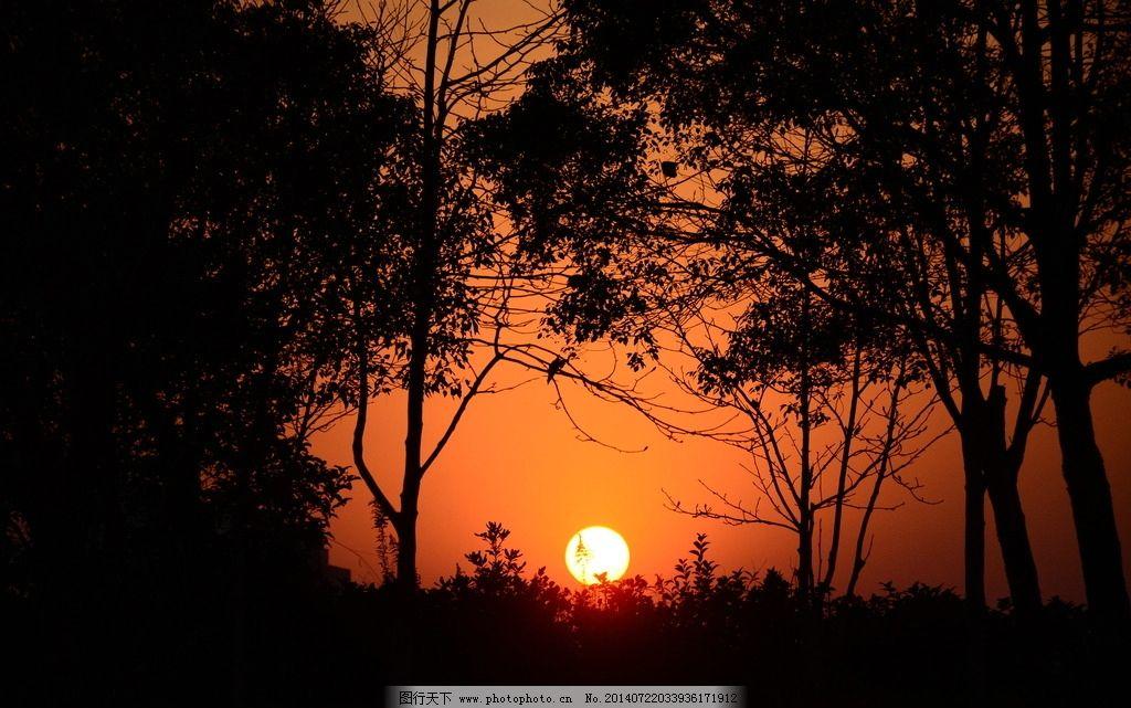 日落剪影 日落 剪影 树木 太阳 傍晚 国内旅游 旅游摄影 摄影 300dpi