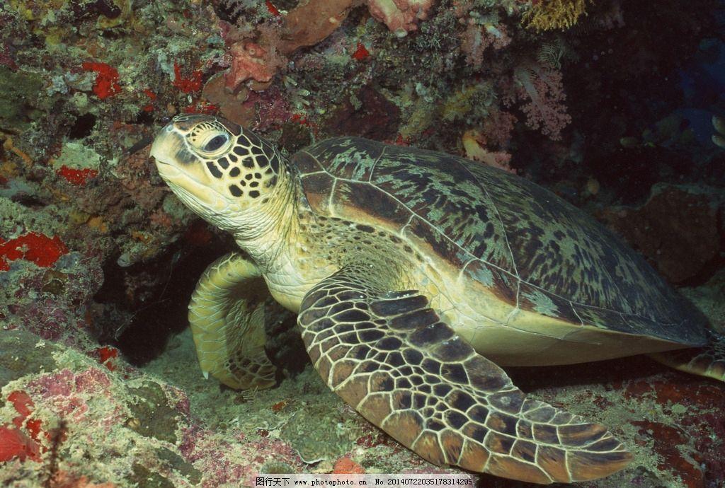 海龟图片,热带海洋 热带海底世界 玳瑁 水族馆 海鱼