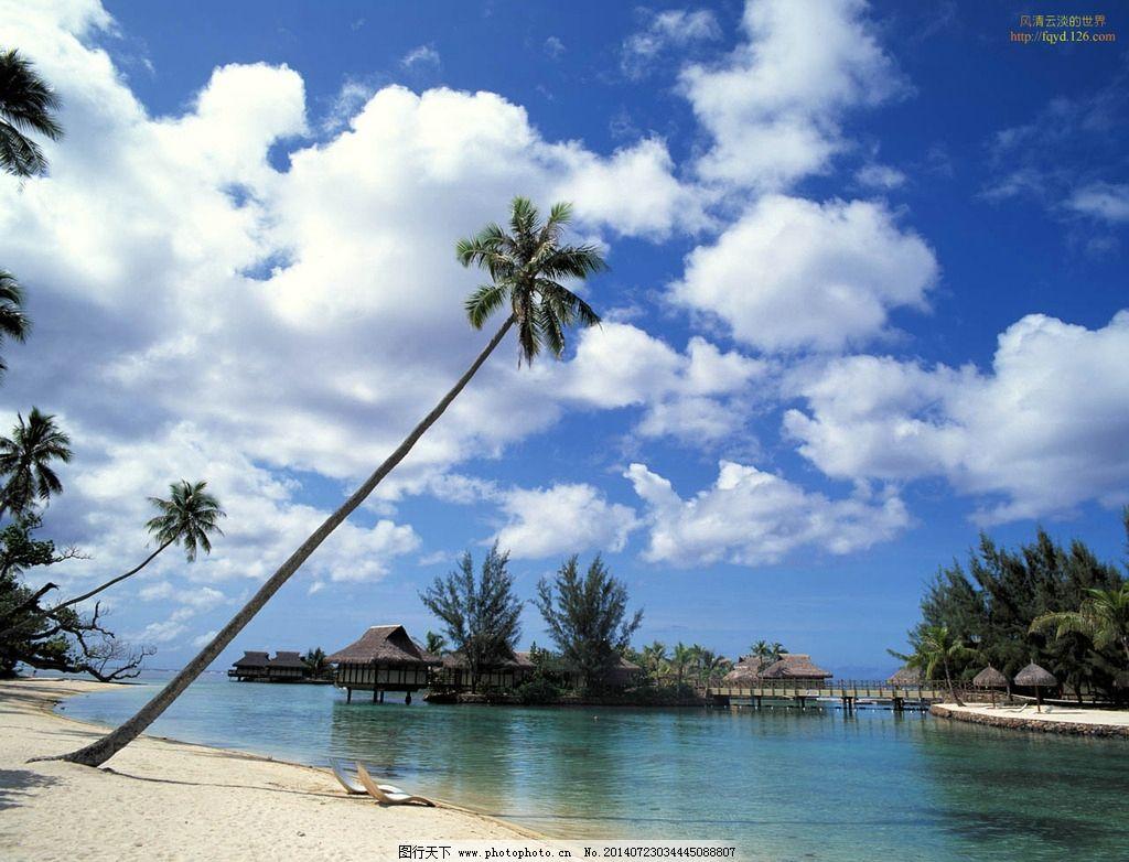 碧海蓝天 椰树 水 海滩