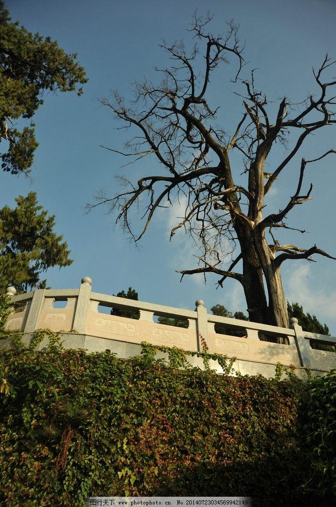 枯树 山景 树木 远景 绿树 田园风光 自然景观 摄影 300dpi jpg