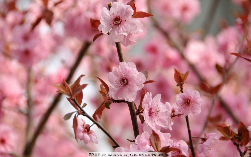 桃花唯美意境手绘图片