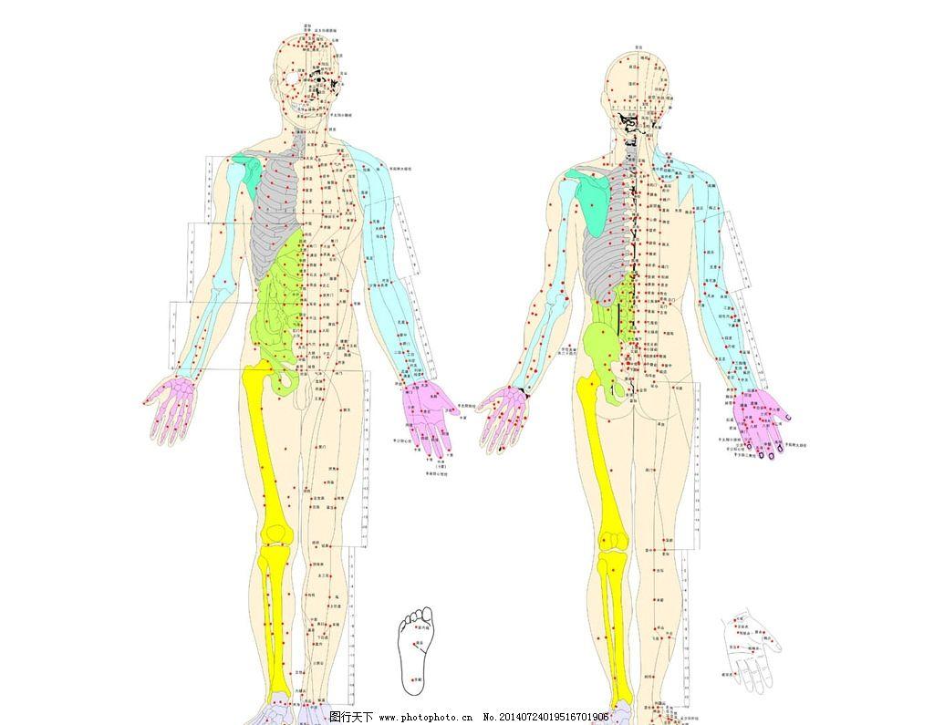 人体穴位囹il_人体穴位图图片