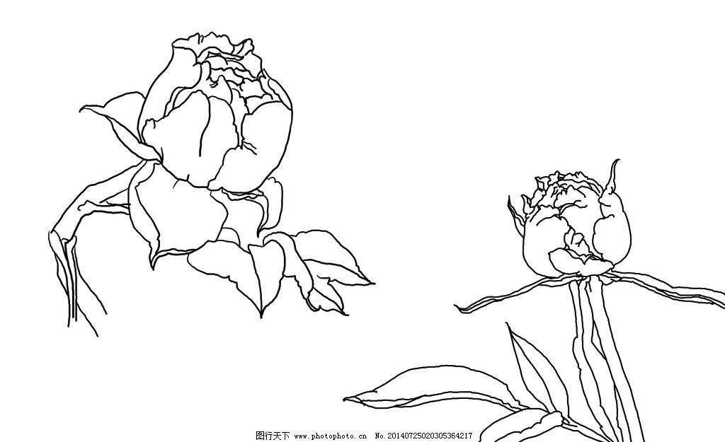线描牡丹花图片