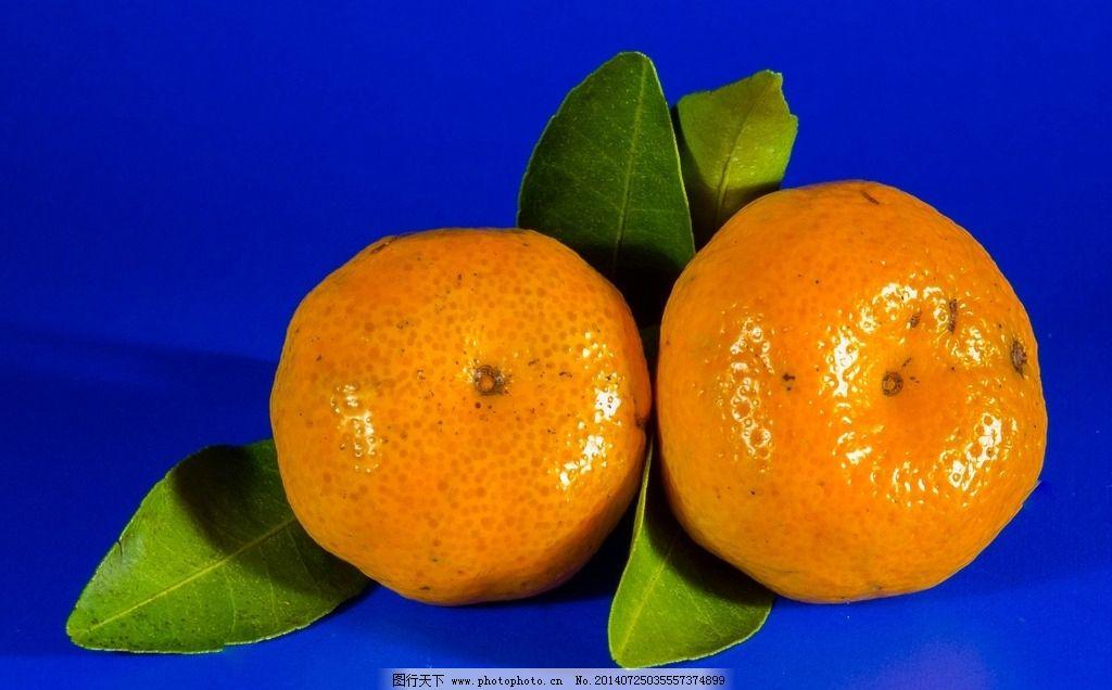 橘子-橘子图片