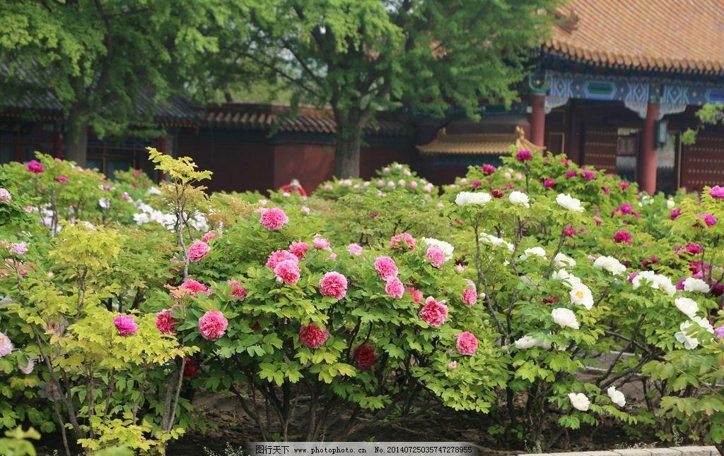 园林植物(花卉部分)考试大纲 - 安徽农业大学图片