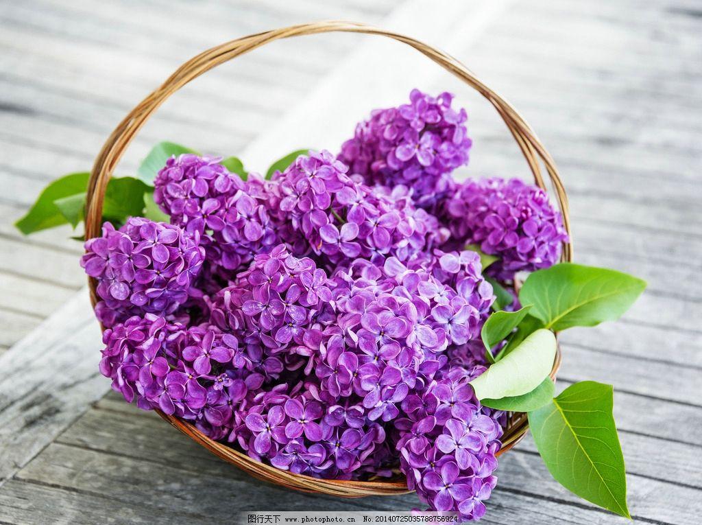 紫色勿忘我 花 摄影 自然