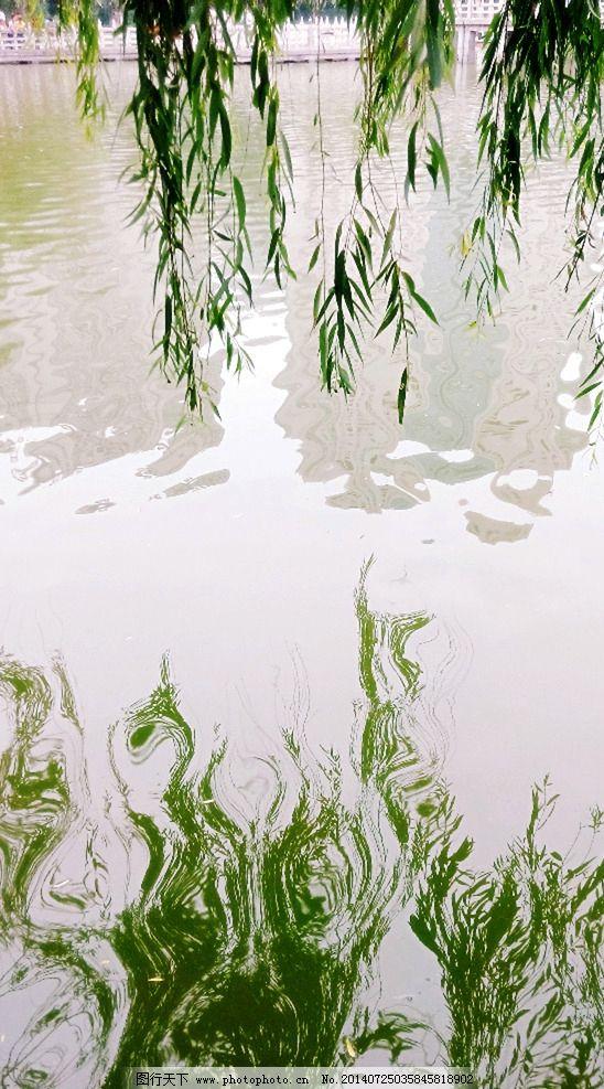 柳枝倒影 柳枝 倒影 水 池塘 绿色 波纹倒影 倒影图片 柳树倒影 树木