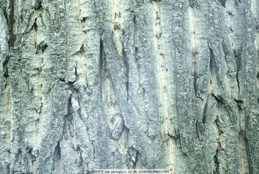 树皮图片,树干 山间树皮 松树皮 层层树皮 老树皮-图