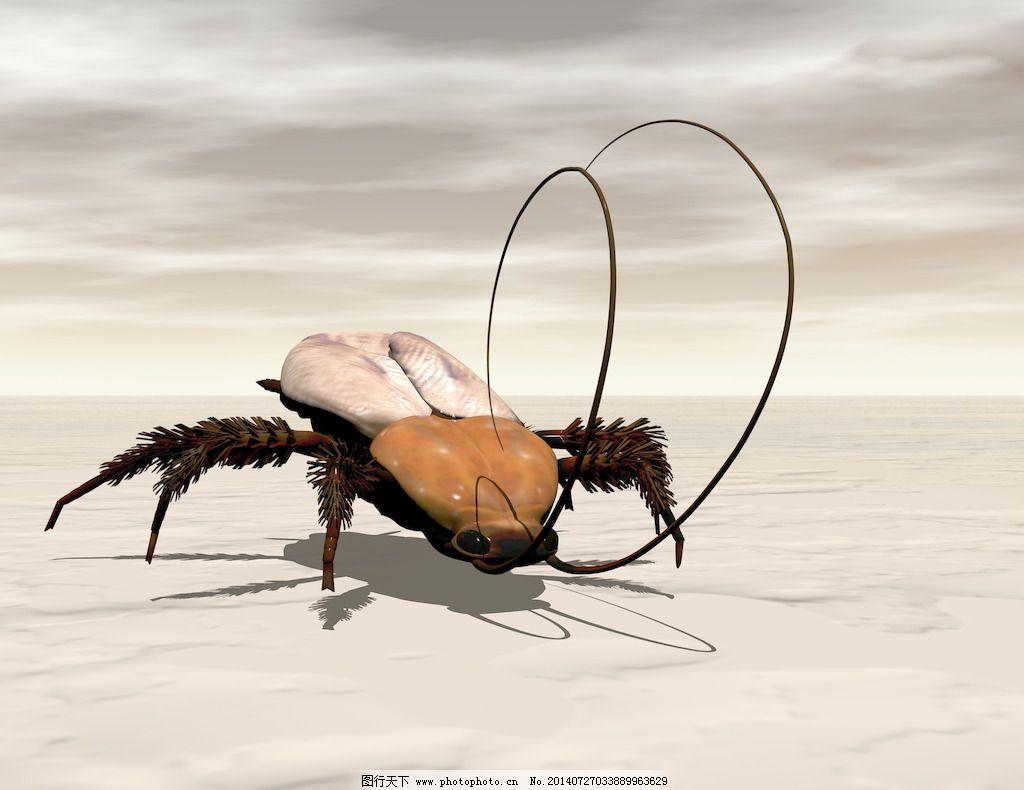蟑螂损坏电路板图