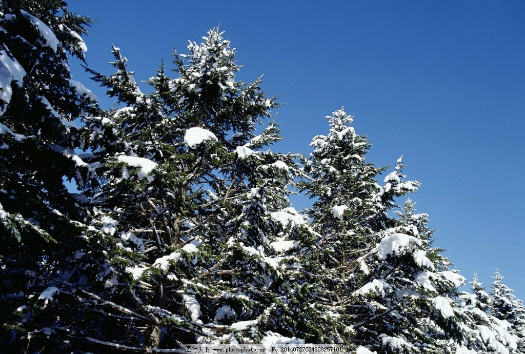 雪景 白雪 自然 森林 树木 植物 蓝天白云 户外风景 自然风景 自然