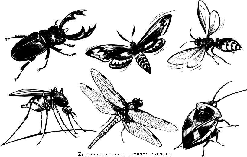 6款精致的常见黑白昆虫矢量素材免费下载 黑白 甲虫 精致 蜜蜂 蜻蜓