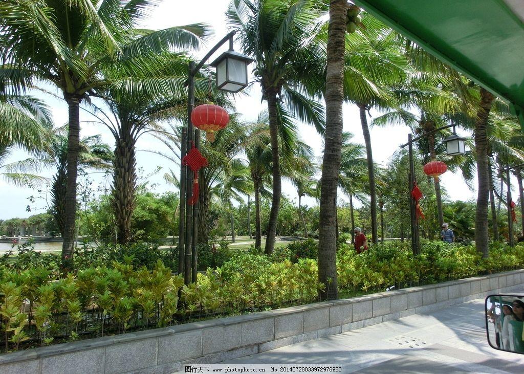 芭蕉树 海南 三亚旅游 海南植物 海南旅游 三亚摄影 椰树林 树 景观