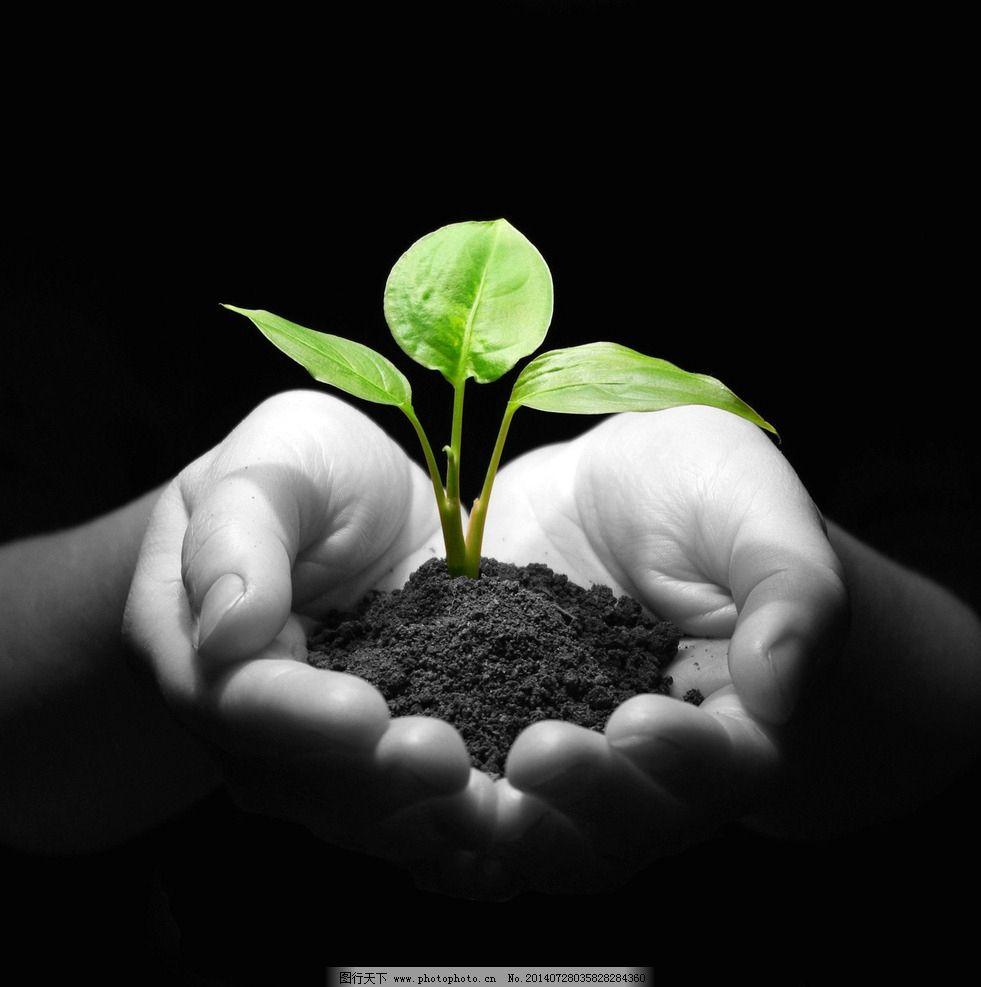 树苗 环保创意 嫩芽 手心的绿叶 环境保护 广告设计系列 树木树叶
