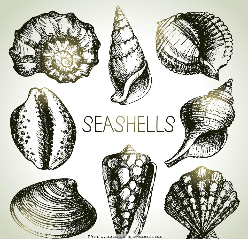 海螺素描结构图