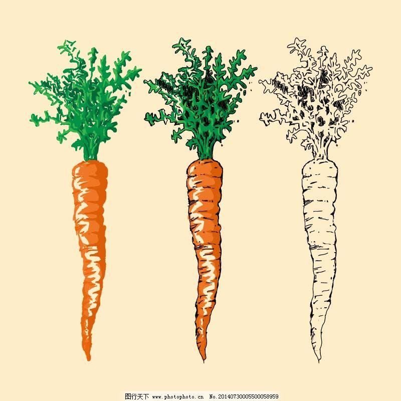 手绘 蔬菜 蔬菜