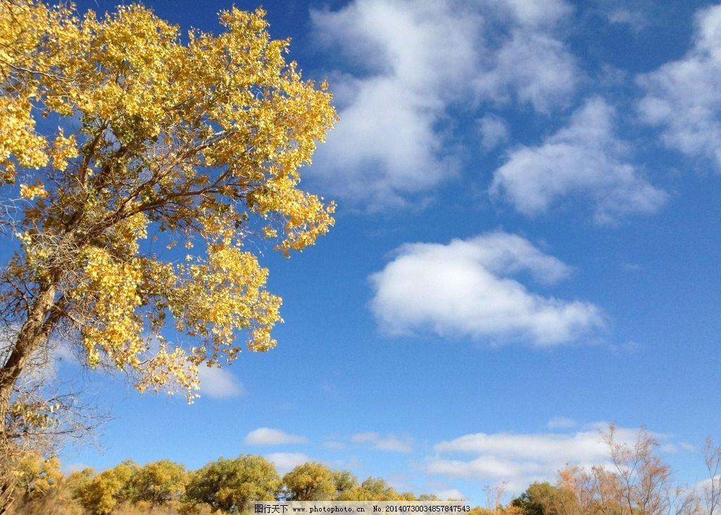 额齐纳旗 蓝天 白云 胡杨林 怪树林 树叶戈壁 内蒙 自然风景 自然景观