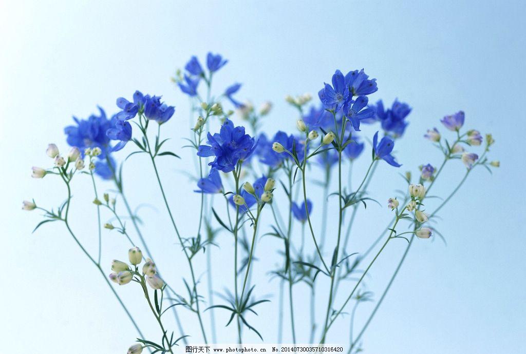 花草-有哪些蓝色的植物呢