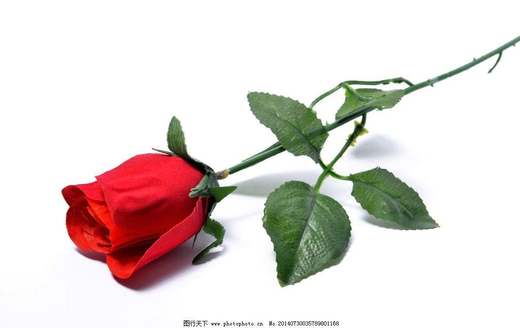野外单枝玫瑰花图片展示