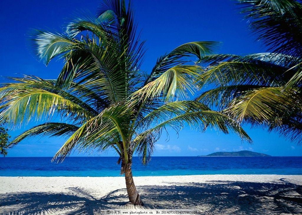 椰子树 海岛 海岛酒店 酒店 度假 摄影 国外旅游 旅游摄影 自然风景