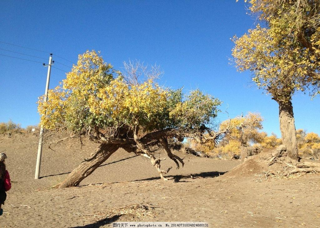 额齐纳旗 蓝天 白云 胡杨林 怪树林 戈壁 树叶 内蒙 自然风景 自然