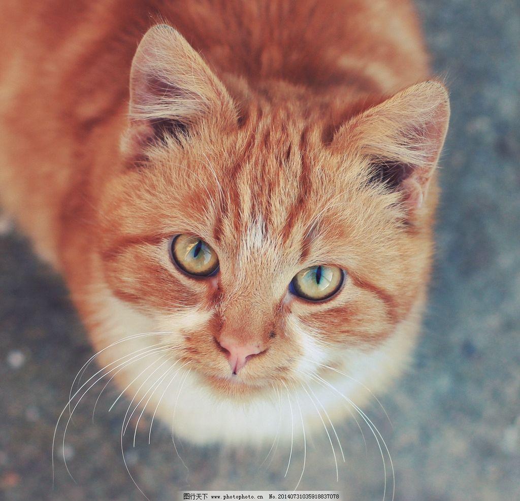 猫咪特写 猫咪 超可爱猫咪 特写 可爱 仰视 正方形 特写镜头 动物