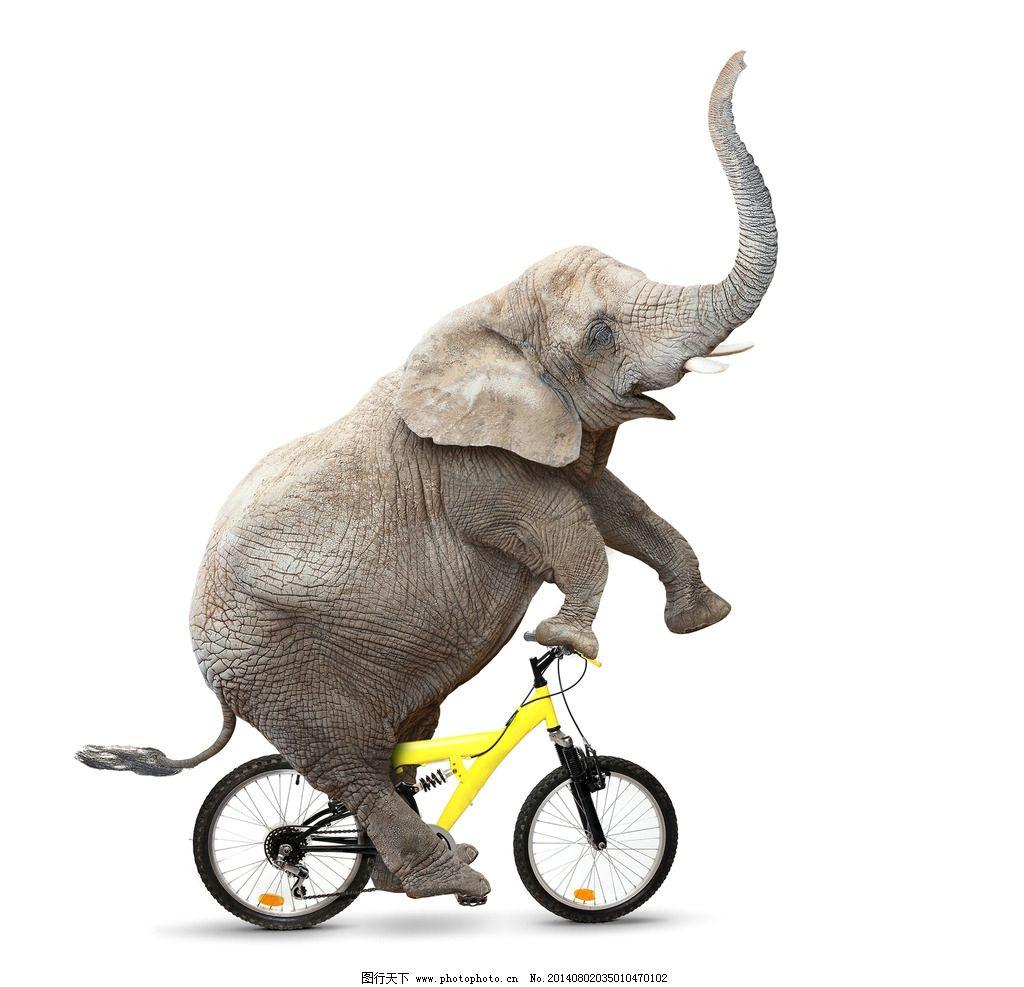 大象 野生 动物 濒危野生动物 哺乳动物 物种保护 野生动物 生物世界