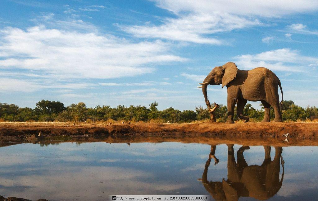 大象 动物 濒危野生动物 哺乳动物 物种保护 野生动物 生物世界 摄影