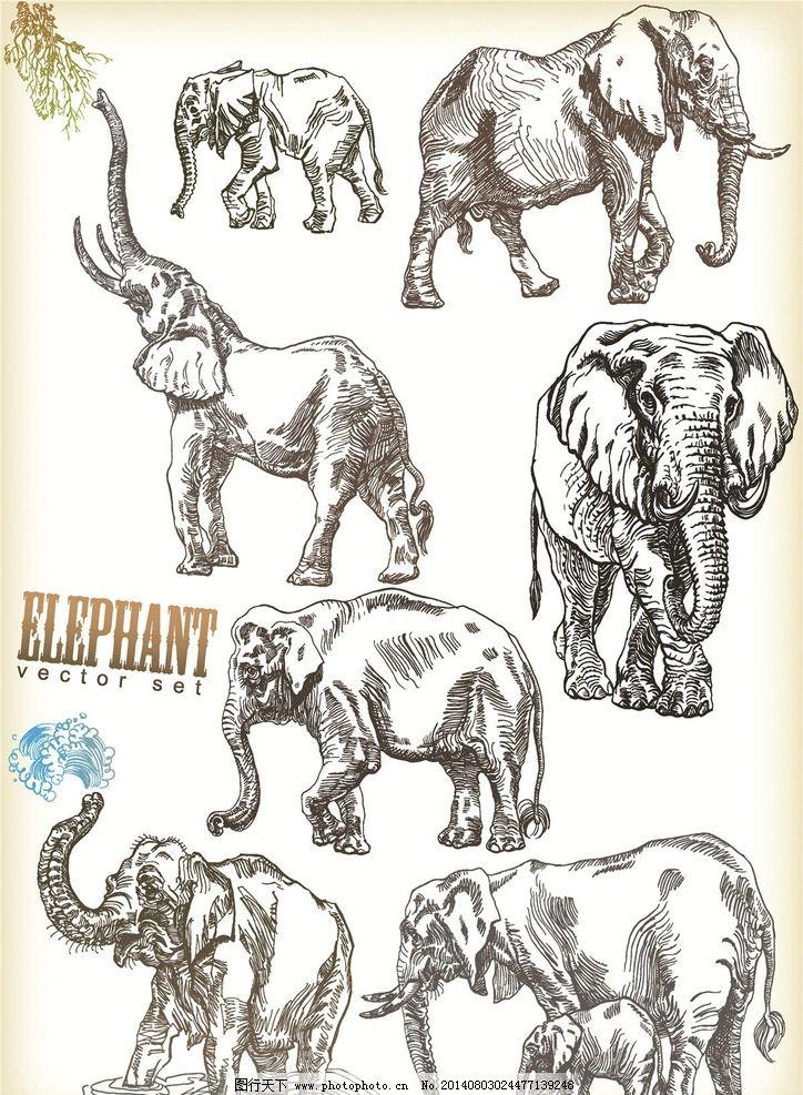 大象 动物 保护动物 可爱动物 野生动物 生物世界 设计 eps