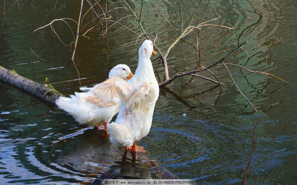水里游的动物大全