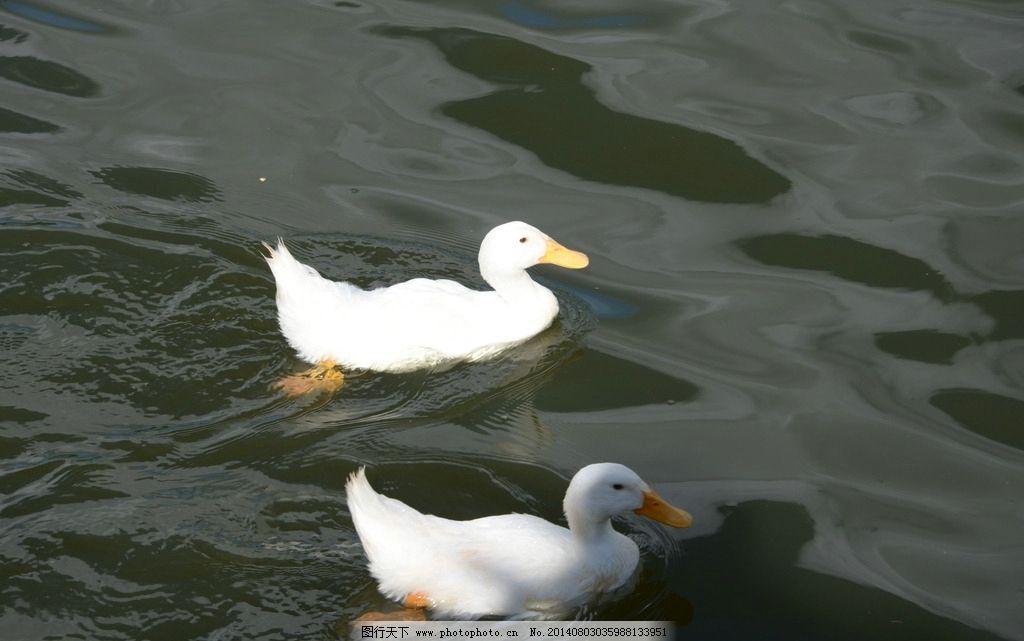 水里动物图片及名字