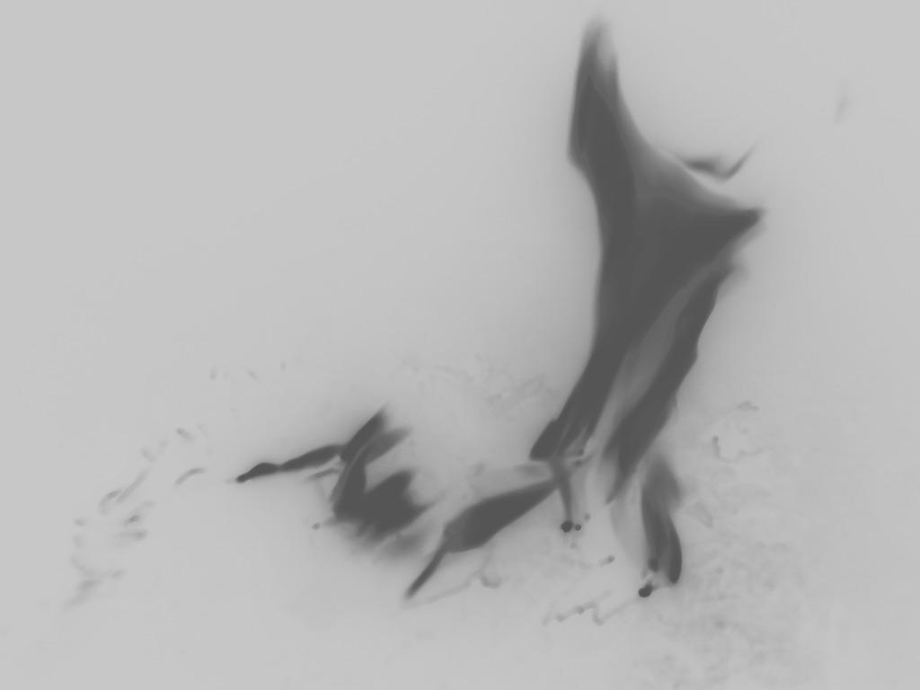 鱼的形态结构图片