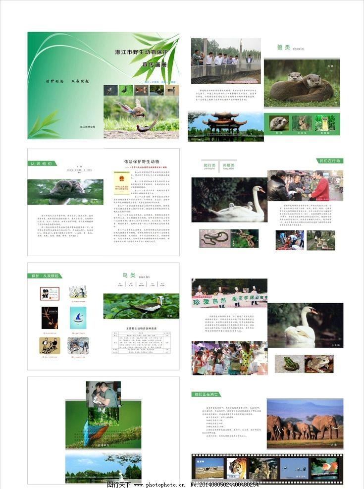 野生动物宣传画册图片