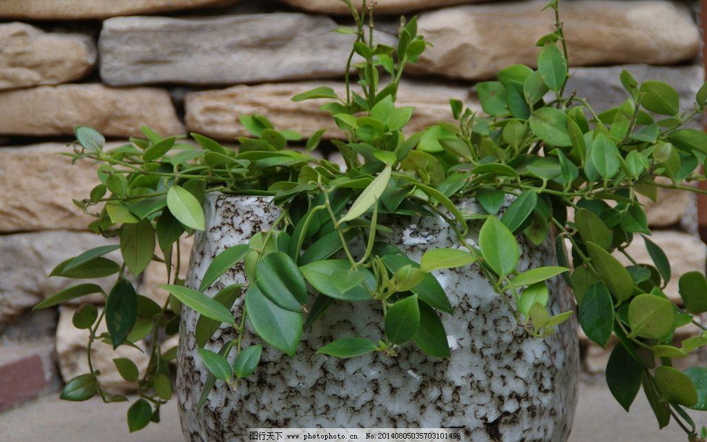 花盆 阳台花盆 阳台 绿色植物 吊篮 植物 绿色 居家 花草 生物世界