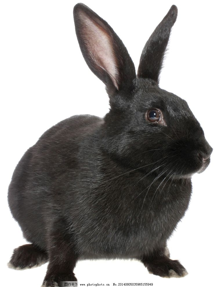 黑兔兔图片大全可爱